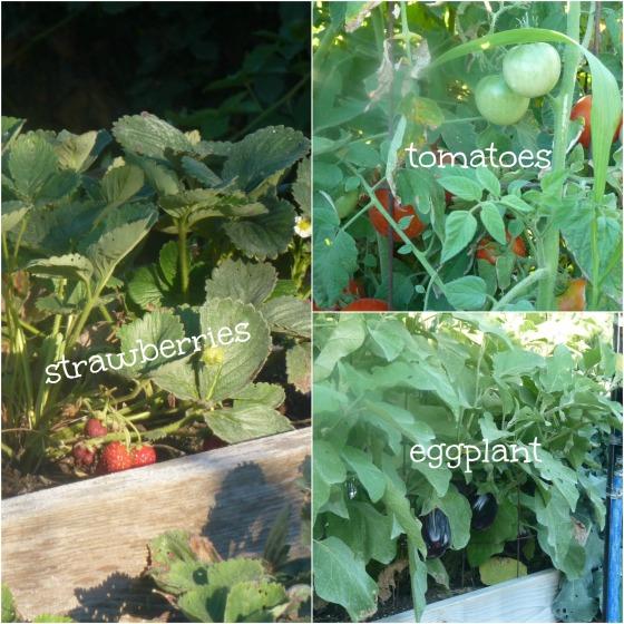 GardenCollage2012wText